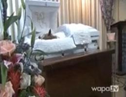 funeral de su perro